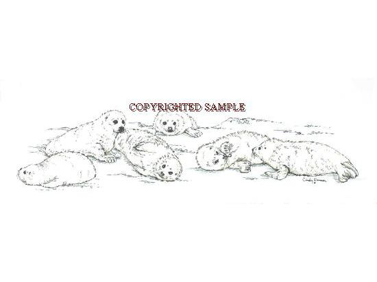 harp seal pups drawing by cindy farmer
