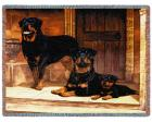 Rottweiler Throw Blanket (Woven/Tapestry)